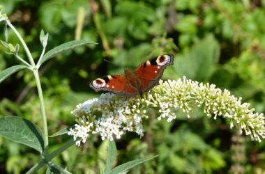 butterfly-605809_1280
